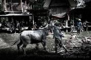 Indonesien__DSC7271_9_01